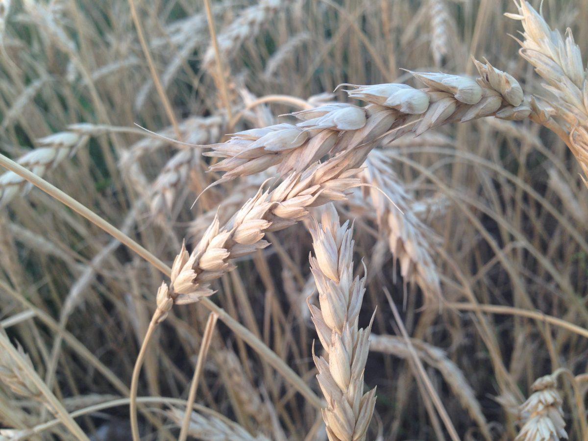 Обзоры рынка сельскохозяйственных товаров Thomson Reuters Lanworth