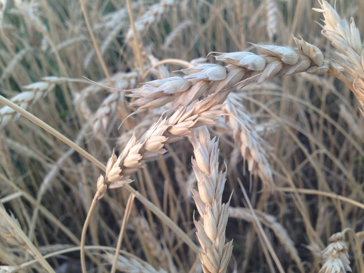Thomson Reuters Lanworth crop production forecasts